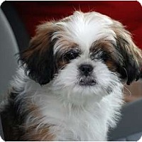 Adopt A Pet :: Teddy - Providence, RI