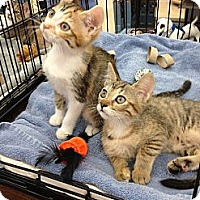 Adopt A Pet :: Jersey and Sydney - Vero Beach, FL