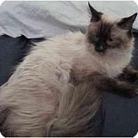 Adopt A Pet :: Connor - Davis, CA