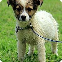 Adopt A Pet :: Harper - Staunton, VA