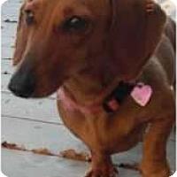 Adopt A Pet :: Keiko - Richmond, VA