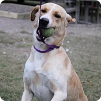 Retriever (Unknown Type) Mix Dog for adoption in Spring, Texas - Tex