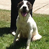 Catahoula Leopard Dog Mix Dog for adoption in Slidell, Louisiana - Farah