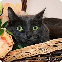 Adopt A Pet :: BeBe - Garden City, MI