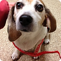 Adopt A Pet :: Mercedes - Fairview Heights, IL