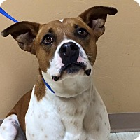 Adopt A Pet :: Toby Mac - Woodward, OK