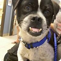 Adopt A Pet :: Zeke - Henderson, NV