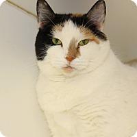 Adopt A Pet :: Jasmine - Savanna, IL