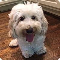 Adopt A Pet :: Cookie - Atlanta, GA