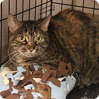 Adopt A Pet :: Sharona - Naperville, IL