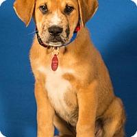 Adopt A Pet :: Bing - Berkeley Heights, NJ