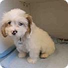 Adopt A Pet :: *TONKI