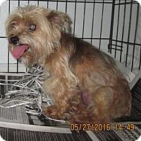 Adopt A Pet :: 16-05-1549 Jewel - Dallas, GA