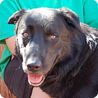 Adopt A Pet :: Mr. Samuel - Las Vegas, NV