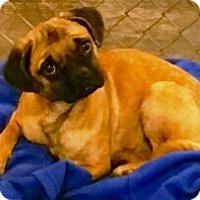 Adopt A Pet :: Chloe - Oswego, IL
