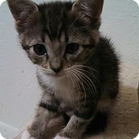 Adopt A Pet :: Mystic - Scottsdale, AZ