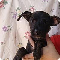 Adopt A Pet :: Thalia - Oviedo, FL
