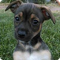 Adopt A Pet :: Myke - sylmar, CA