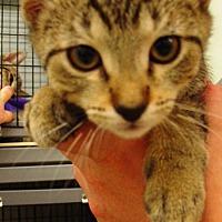 Adopt A Pet :: Josie - Kalamazoo, MI