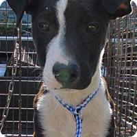 Adopt A Pet :: Greg - Laingsburg, MI