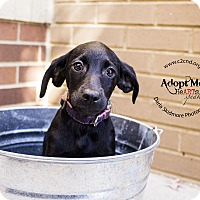 Adopt A Pet :: Spooky (Addams Family Litter) - Mooresville, NC