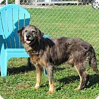 Adopt A Pet :: Randy - Batavia, OH