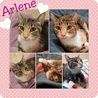 Adopt A Pet :: Arlene - Arlington/Ft Worth, TX