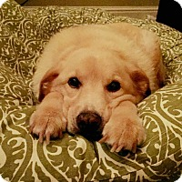 Adopt A Pet :: Belle - Greenfield, WI