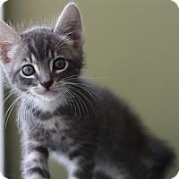 Adopt A Pet :: Saffron - Marina del Rey, CA