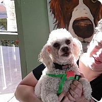 Adopt A Pet :: Dutch - Thousand Oaks, CA