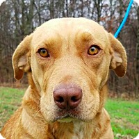 Adopt A Pet :: Stella **FOSTER NEEDED** - New York, NY