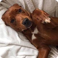 Adopt A Pet :: Ruby - Hillsboro, OH