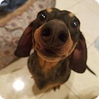Adopt A Pet :: Zoey - Woonsocket, RI