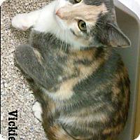 Adopt A Pet :: Vicki - Fullerton, CA