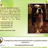 Adopt A Pet :: Daisy - Ottawa, ON