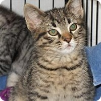 Adopt A Pet :: Jitterbug - Milwaukee, WI