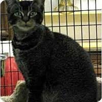 Adopt A Pet :: Katinka - Davis, CA