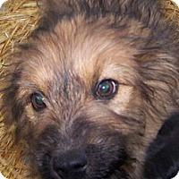 Adopt A Pet :: Einstein - Chewelah, WA