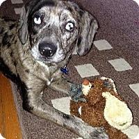 Adopt A Pet :: Trinity - Hamilton, ON
