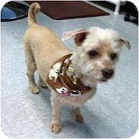 Adopt A Pet :: Manny - Gulfport, FL