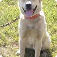 Adopt A Pet :: Ringo - Saskatoon, SK