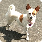 Adopt A Pet :: Lucy  Cute Lil Punkin!