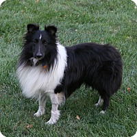 Adopt A Pet :: Oreo (Pending Adoption) - Mission, KS