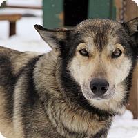 Adopt A Pet :: Pond - Jefferson, NH