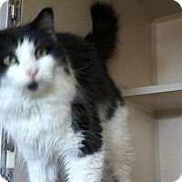 Adopt A Pet :: McGuyver -Neck Nuzzler! - Arlington, VA