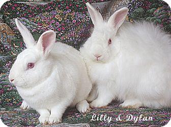 Florida White Mix for adoption in Santa Barbara, California - Lilly