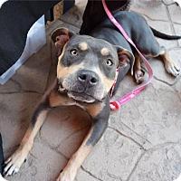 Adopt A Pet :: Doris - Sacramento, CA
