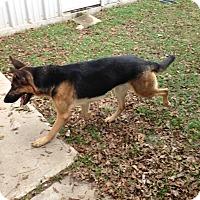 Adopt A Pet :: Rumor - Houston, TX