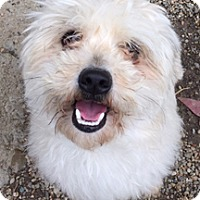 Adopt A Pet :: Pearl - Patterson, CA