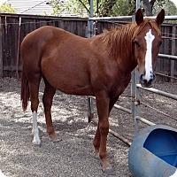 Adopt A Pet :: Mazie - El Dorado Hills, CA